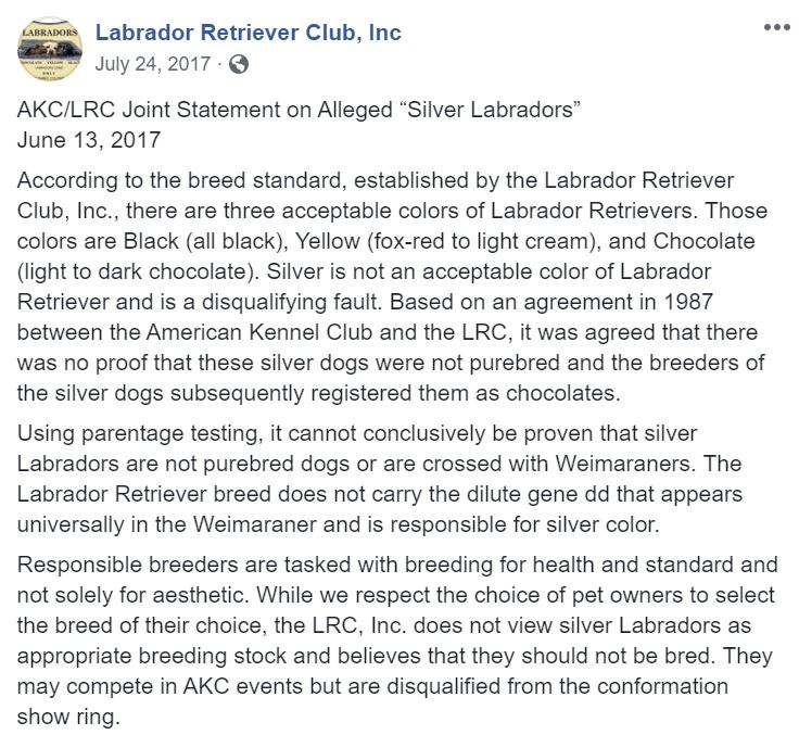 Labrador Retriever Club Silver Labs